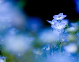 blue-flowers-wallpaper