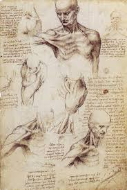 Body by Leonardo Da Vinci